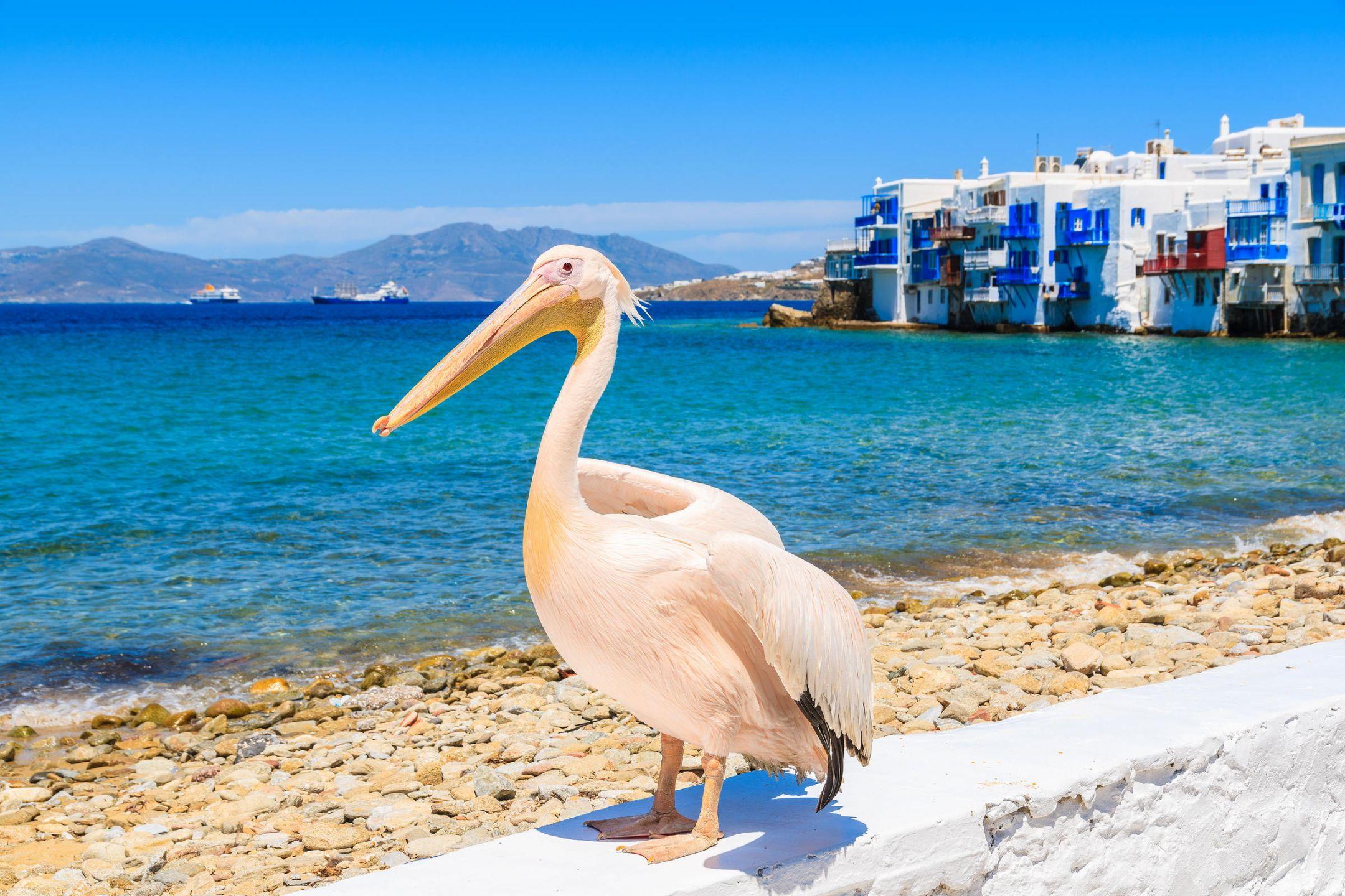 Petros the Pelican – Mykonos Official Mascot